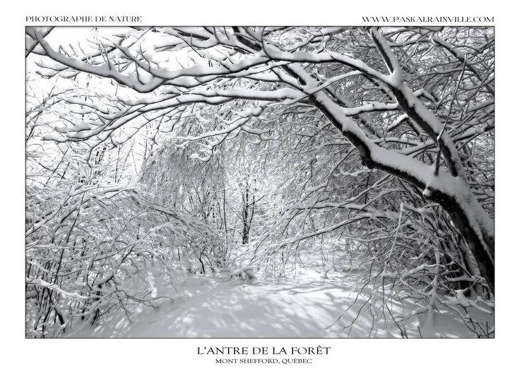 L'antre de la forêt Prise au Mont Shefford, Québec, Canada http://www.paskalrainville.com/