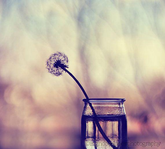"still life, fine art print, ""lonely"", dandelion flower photography, home decor"