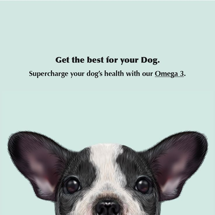 We all know about the amazing benefits of Omega 3 for human health, but did you know it can help your dog stay healthy too? Supercharge your dog's health.