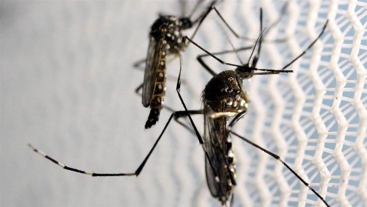 Mosquitoes Thrive in U.S. But Don't Blame Climate Change