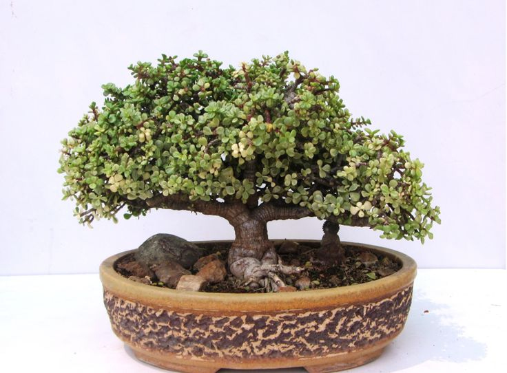 Tree Craft's bonsai gallery in Bangalore. Info: 90196-85428,  tree.craft@ymail.com,  www.treecraft.co.in