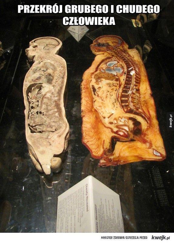 Tydzień 45: Otyłość pani i otyłość jej kota :-( Dziewczyny! Masakra!Wchodzę dziś na wagę Vitalia