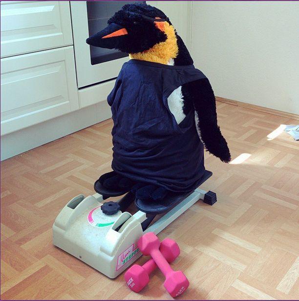 working on that sexy pungu body - so he can eat more fishsticks! #penguin #penguins #pinguin #pinguine #pinguino #pinguinos #pinguim #pingouin #pingüino #ペンギン #пингвин #펭귄 #instabird #antarctica #stuffedanimal #pingu #penguinlove #pinguinito #montythepenguin #johnlewis #johnlewisadvert #montypenguin #monty #bikinibody #hometrainer #exercise #workout