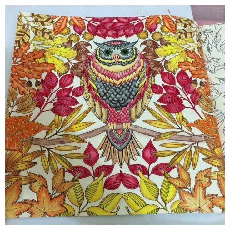 Owl Secret Garden Coruja Jardim Secreto Johanna Basford Adult ColoringColoring BooksColouringCopic