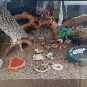 Hermit crab net on Etsy