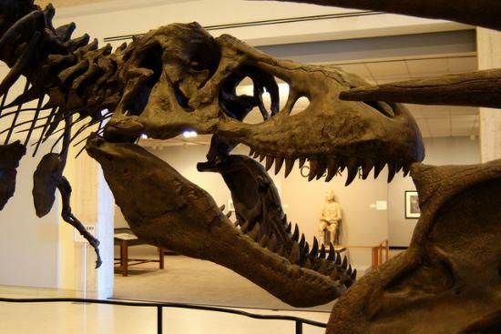 Photos of Museum of Texas Tech University, Lubbock - Attraction Images - TripAdvisor