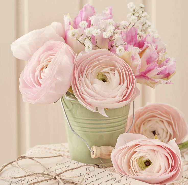 17 Best Flowers Images On Pinterest