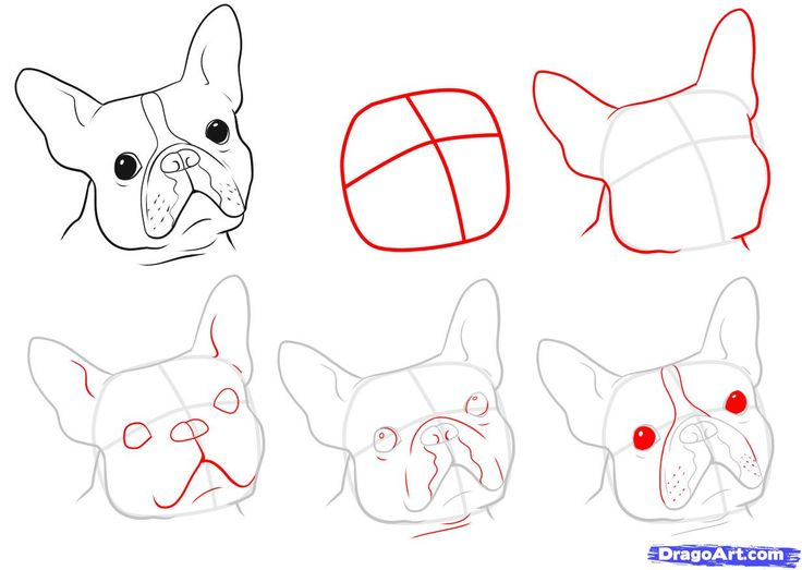 french bulldog draw - Buscar con Google