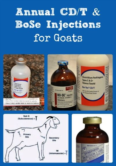 Describes why CD/T & BoSe injections are needed annually for goats, where to get the drugs, & how to administer them.
