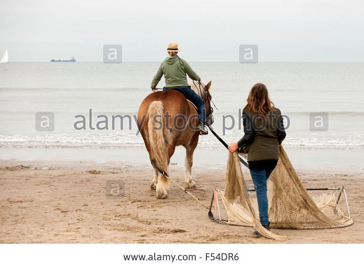 Demo Fishing With A Horse Along North Sea Coast, Nieuwvlietbad Stock Photo, Picture And Royalty Free Image. Pic. 89223770