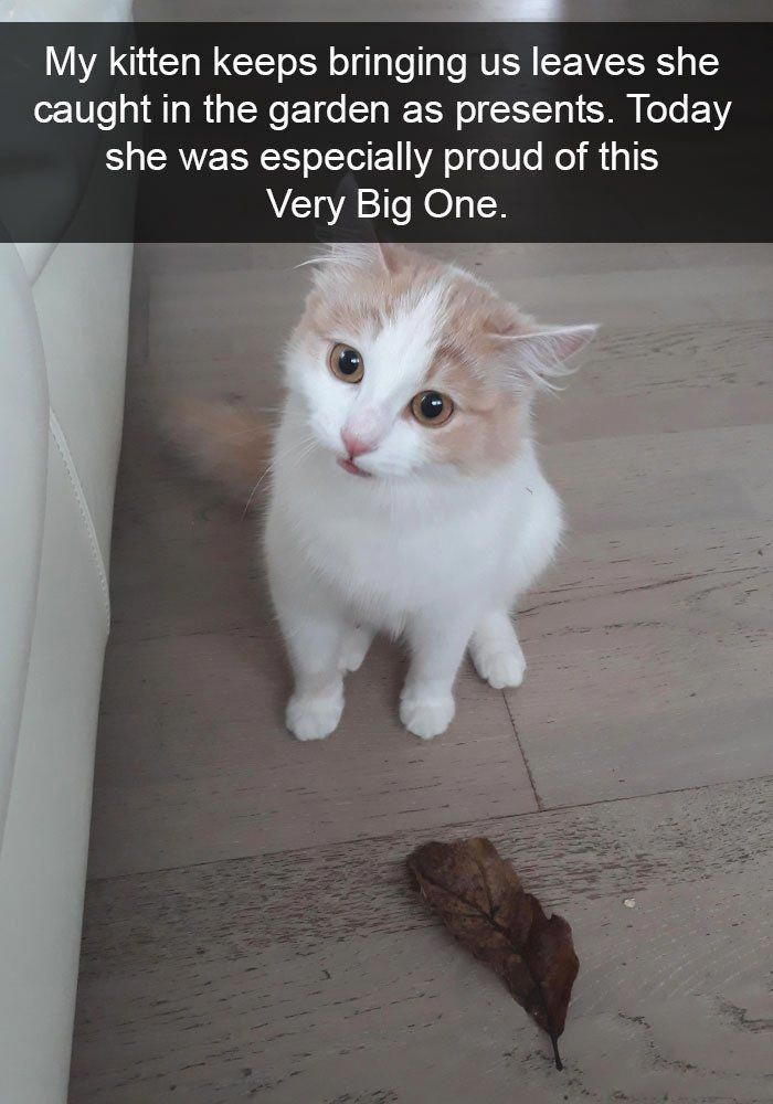 10+ lustige Katzen-Snapchats, die dir das größte Lächeln bereiten (neue Bilder …