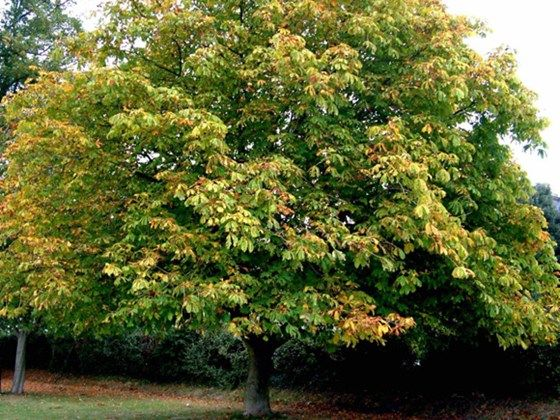 17 best trees paRTIAL SHADE images on Pinterest | Backyard ...