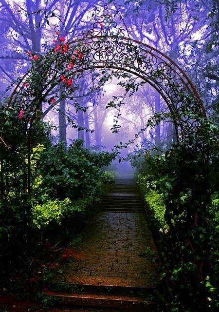 Forest Arch, Nandi Hills, Bangalore, India- Nandi Hills or Nandidurg is an ancient hill fortress of southern India, in the Chikkaballapur district of Karnataka state. It is located just 10 km from Chickballapur town and approximately 60 km from the city of Bangalore