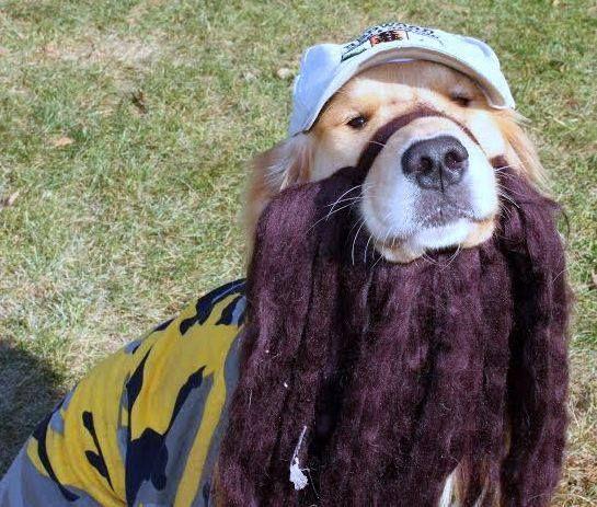 Declan as Jace Roberston from Duck Dynasty. | #Halloween #DogCostume #HalloweenCostume #Dogs