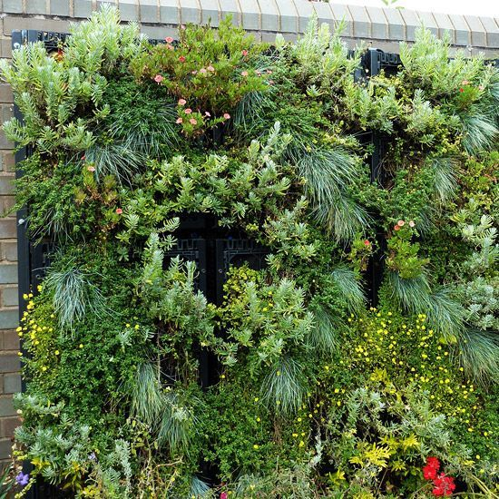 Vertical gardens -- think living walls -- are of the hottest new garden trends and yet it's one of the oldest (have you ever grown a vine on a fence or trellis?).