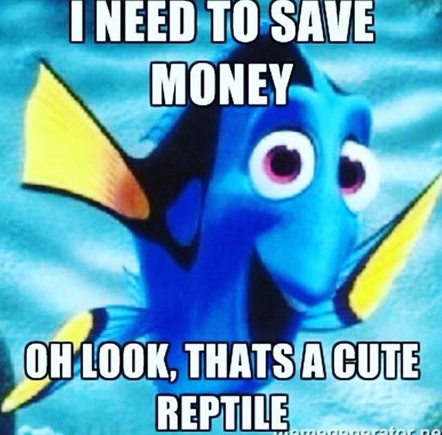 Lol I have a tortoise & if I had the money & space I would love to get a red foot... I kind of want to get a crested gecko since they don't require special lighting.