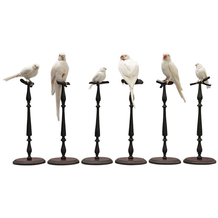 Rare Collection of Albino Birds | From a unique collection of antique and modern taxidermy at https://www.1stdibs.com/furniture/more-furniture-collectibles/taxidermy/