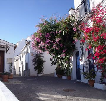 Beautiful flowers on the whitewashed houses of Bedar on a sunny December day.