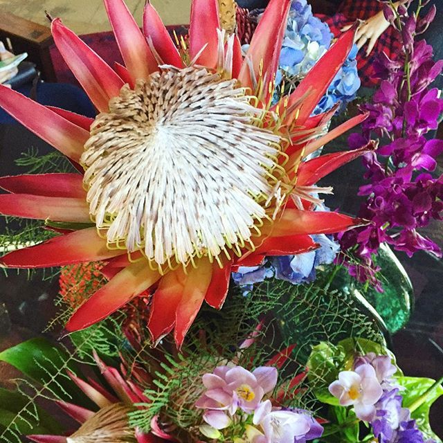 Spring in Cape Town.  #protea #capetown #flowers #spring #summer #southafrica