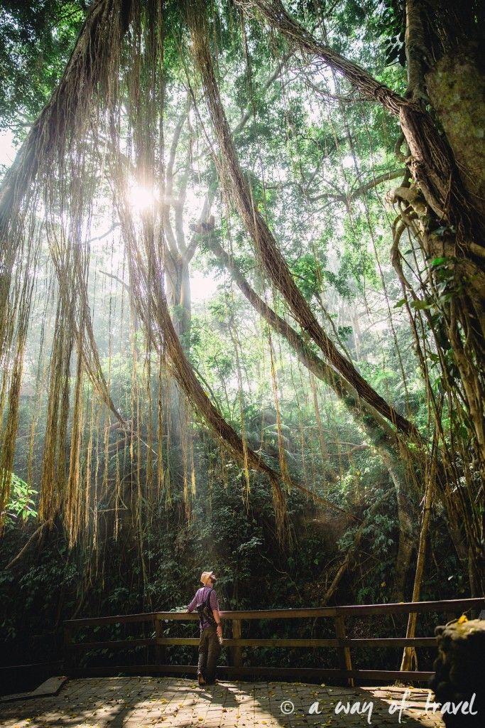 Ubud Bali foret singes monkey forest quoi faire idée touristique 9