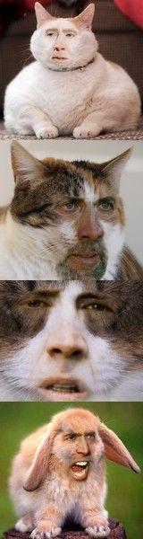 Nicolas Cats