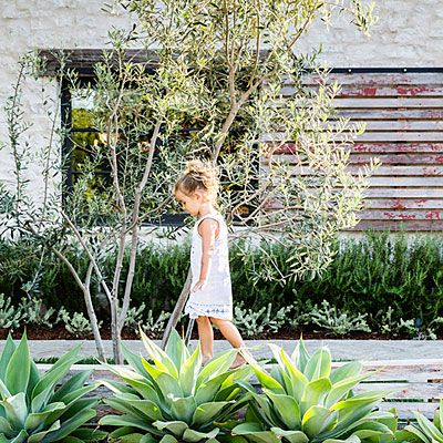 A palette of drought-tolerant, low-maintenance plants and trees—from rosemary shrubbery and succulents to olive trees—pay homage to Napa and Italy.