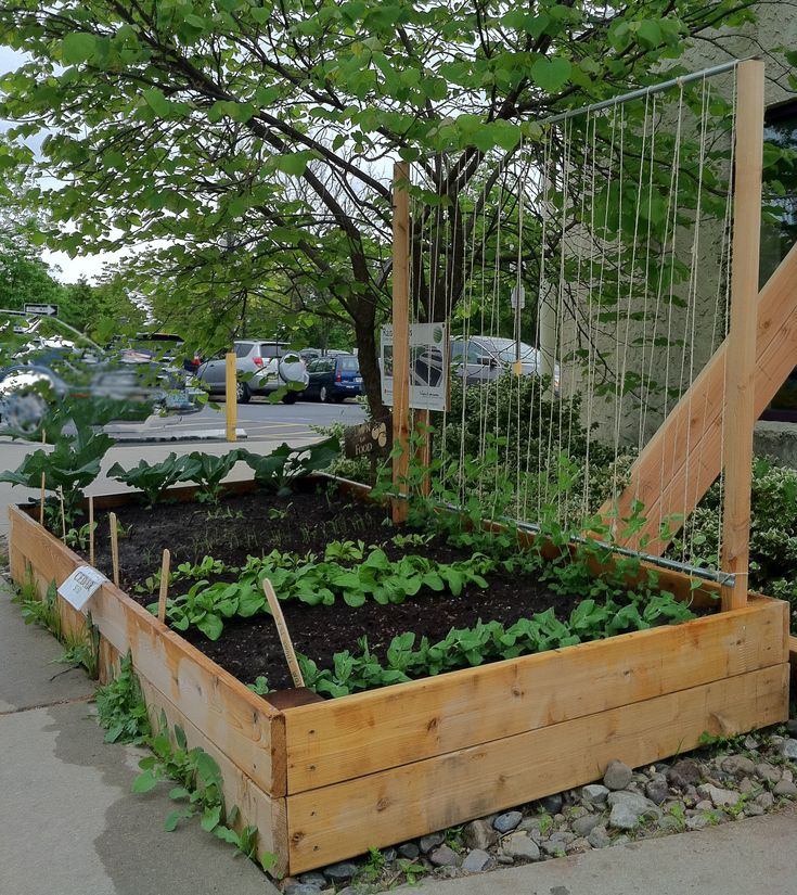 Pea Trellis: With Wood, Electrical Conduit Pipe,and Twine  36 Inches Tall