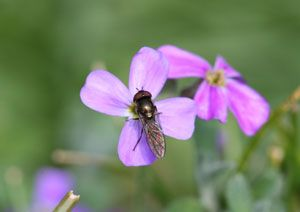 http://www.bto.org/volunteer-surveys/gbw/gardens-wildlife/gardening/invertebrates