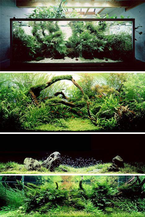 "Aquariums by artist Takashi Amano who applies principles of Japanese gardening to ""aquascaping"""