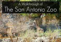 Your guide to a day at the San Antonio Zoo in Texas.