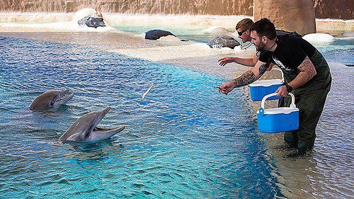 Zoo Duisburg: Delfine DIEGO und DARWIN reisen in den Süden
