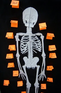 The Inspired Classroom: Skeletal System activity