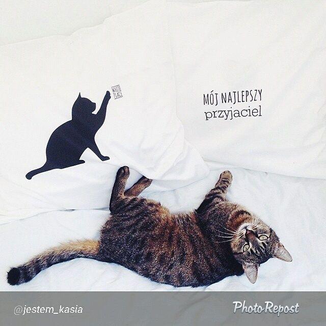 #poszewki #jestem_kasia #mojnajlepszyprzyjaciel #kot #bed