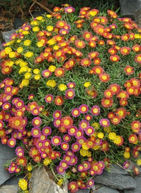 Die 25+ Besten Ideen Zu Winterharte Balkonpflanzen Auf Pinterest ... Pflanzen Fur Den Balkon Hilfreiche Gartentipps