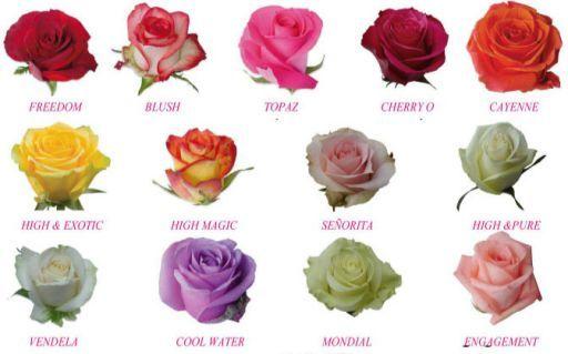 8 best images about caracteristicas de las flores on - Clase de flores y sus nombres ...
