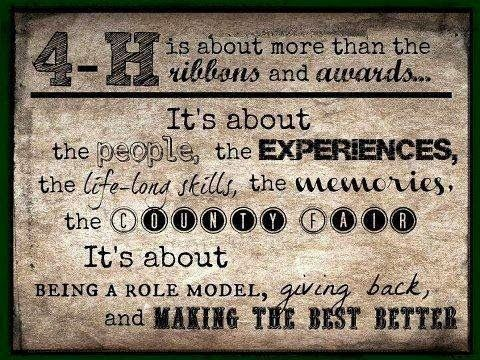 show steer quotes | Show Cattle Quotes Livestock showing,