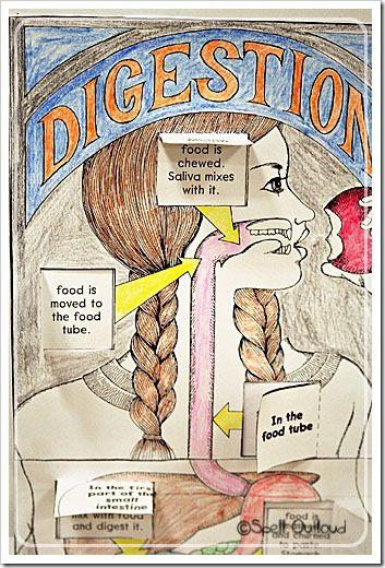 Human+Anatomy:+The+Digestive+System