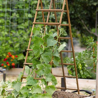 Kitchen Garden Trellis, the squash seedlings are growing and our trellis are made.  Can not wait to watch our summer squash and zucchini grow.