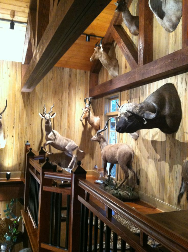 trophy room wall