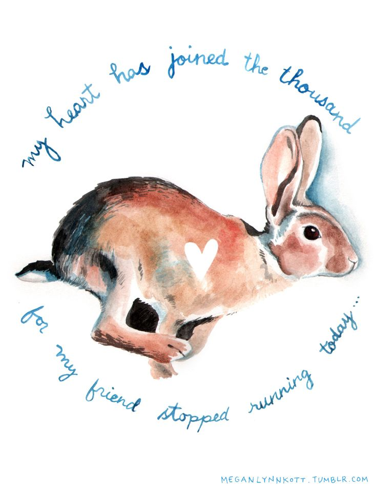 Pet loss. My favorite drawing I've done in a while. Inspired by Watership Down. Done at Oakland Drink & Draw.