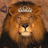 Follow My Blog, Surviving a Loved One's Addiction  www.addictionsevilcourse.blogspot.comBig Cat, Lap Book, Lion, Life Science,  King Of Beasts, Homeschool Science,  Panthera Leo, Lapbook, Animal