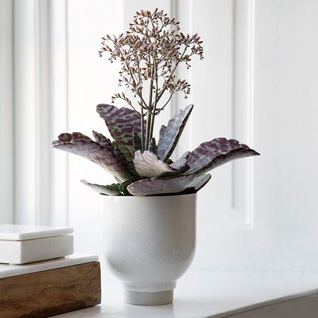 The wonderful white flowerpot appears light, Nordic and modern but with a great deal of charm and unpredictability.
