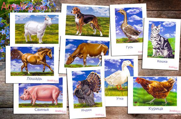 Домашние животные картинки для детей, развивающие карточки с животными скачать и распечатать