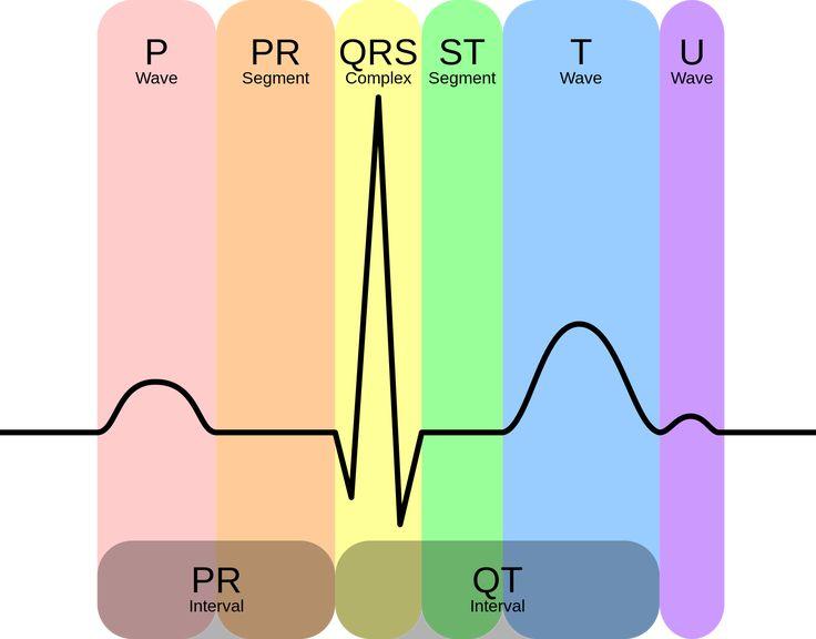 EKG & Blocks: What Nurses Need To Know