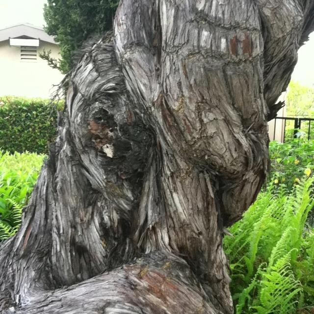 Amazing tree trunk