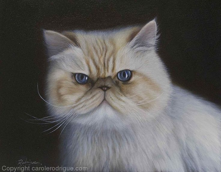 Magoo, Himalayan Persian by Carole Rodrigue Oil ~ 11 x 14      #petportraits #cats #HimalayanPersians #catpaintings #catart #catartists #oilpaintings #realisticcatpaintings #animalartists #petportraitsCanada #petportraitsUSA #catlovers #Persians #petpaintings #realisticpetpaintings #realisticcatpaintings #oilpaintings #realism #commissionacatpainting #giftideas #Christmasgiftideasforpetlovers #petproducts