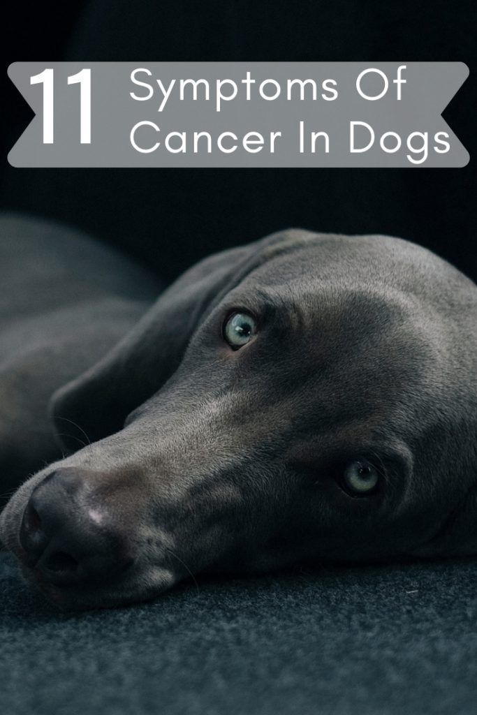 Healthy Tips There Are Things You Should Never To Do To Your Dog