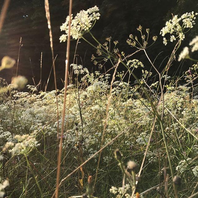 #wildflowers #jardindesauvages