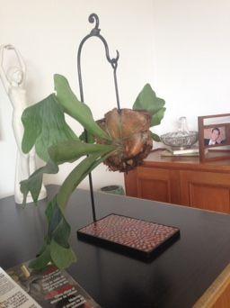 Platicero Mini Angie Oh! 60cm de alto, base rectangular de puntos en color coral. Perfecto para decorar cualquier espacio! Info por whatsapp 3152227007