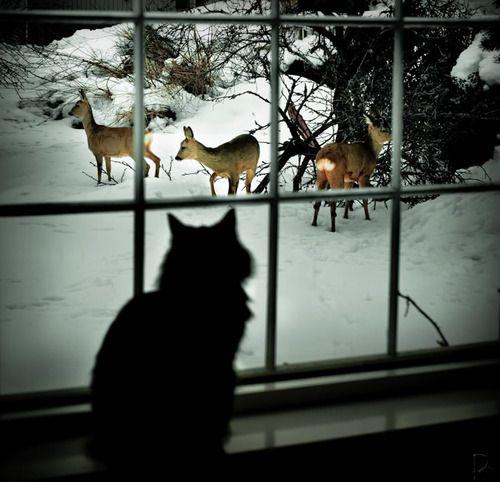 Beautiful Silhouette of Cat in Window Watching Deer in the Snow